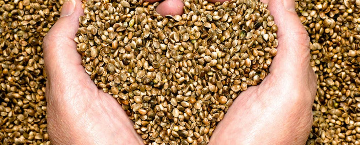 Buy Our Hemp Seeds!