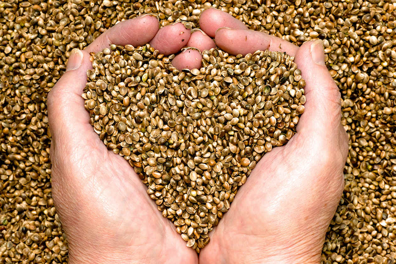 https://freidafarms.com/wp-content/uploads/hemp-seed.jpg